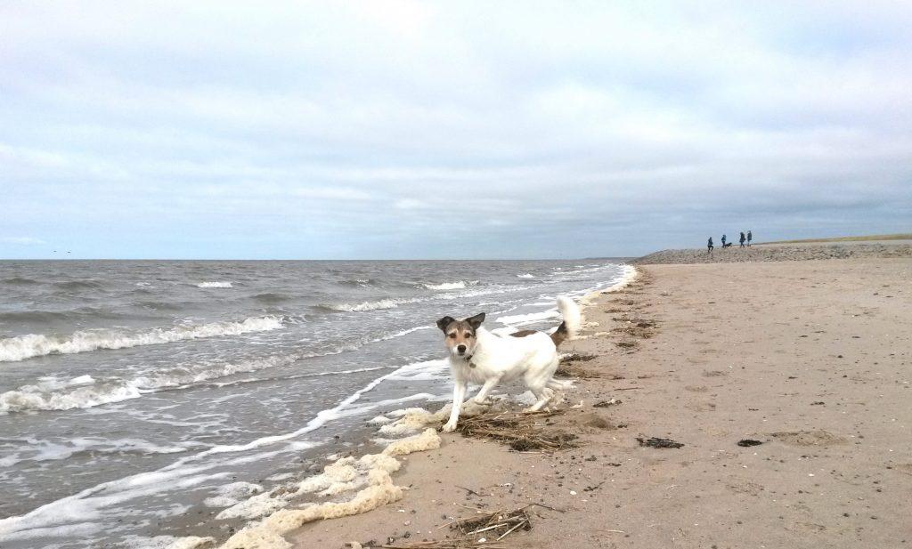 Am Strand von Nordstrand mit dem Hund