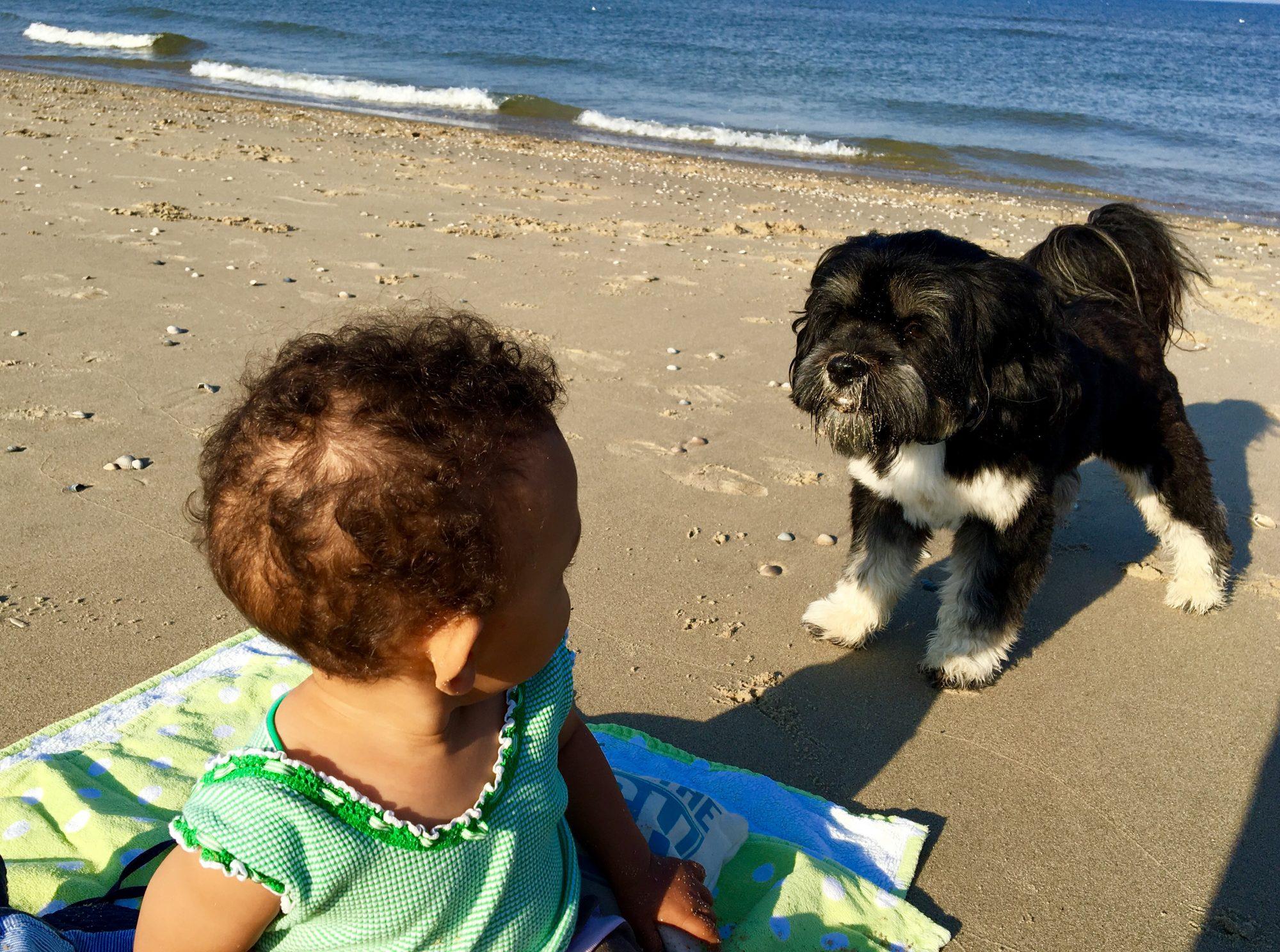 Urlaub auf Texel –Hunde am Strand