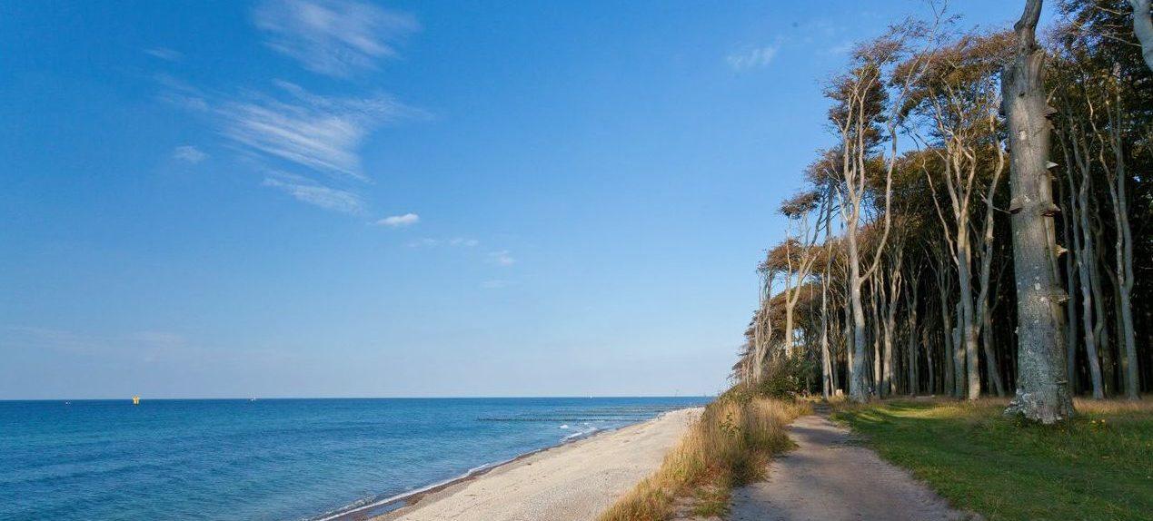 Schönste Strände der Ostsee: Gespensterwald bei Nienhagen
