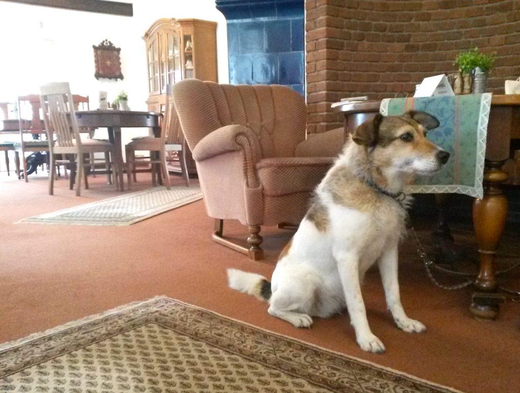 Im Café des Pharisäerhofs auf Nordstrand Hundehotel