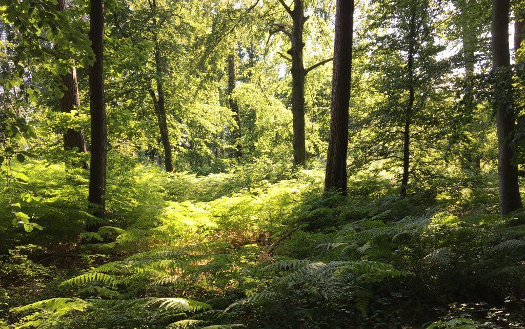 Graal Müritz Der Weg zum Strand führt durch den Wald
