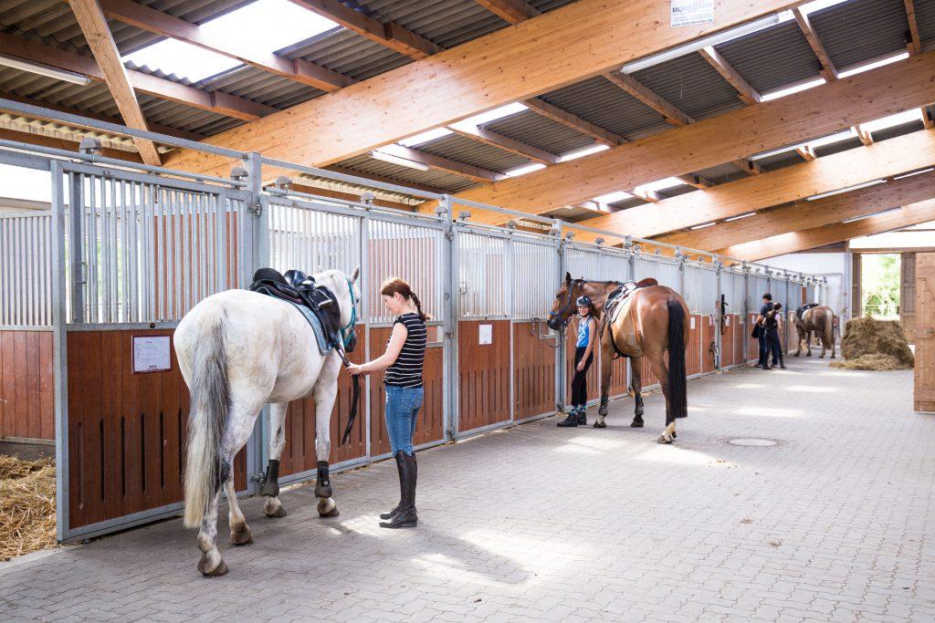 Stall im Reiterhof Witt Küselhof Foto: Britta Ahlström