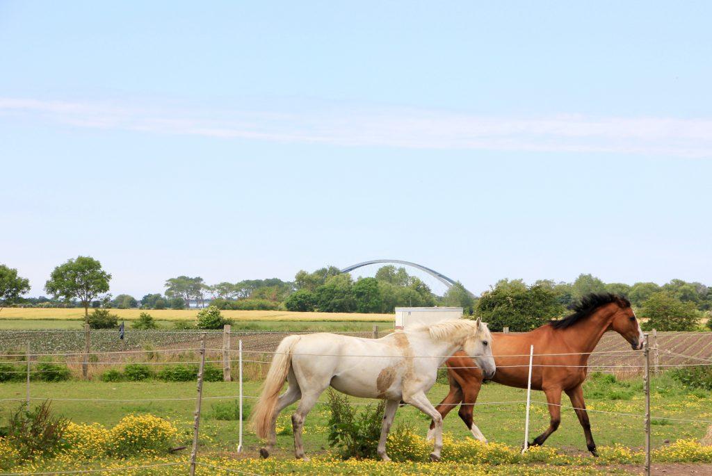 Pferde auf dem Küselhof