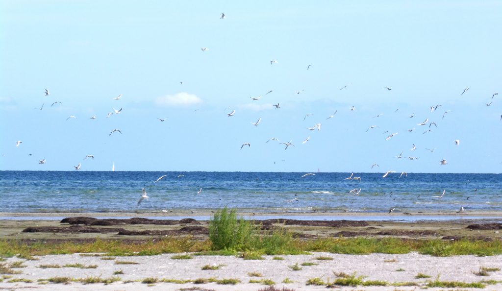 Auf der Vogelschutzinsel Langenwerder