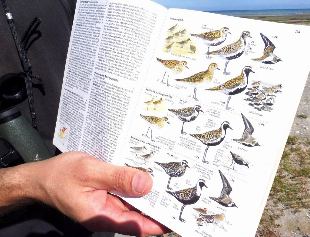 Vogelbestimmung mit Buch