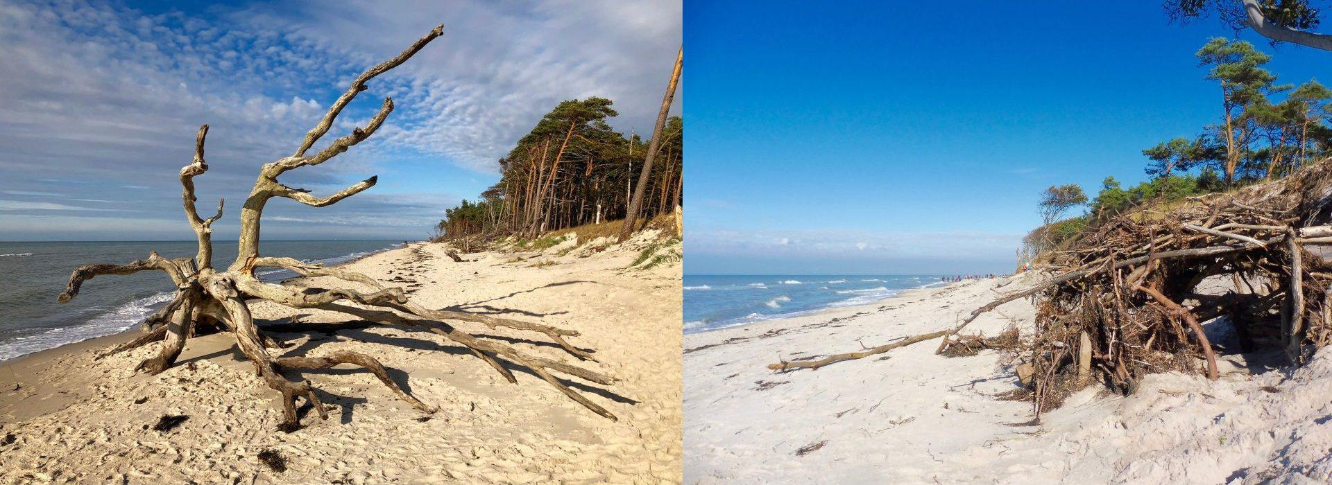 Baumkrake und selbst gebaute Strandhütte am Weststrand auf dem Darss